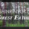 Thumbnail image for Shinrin-Yoku: Forest Bathing Video