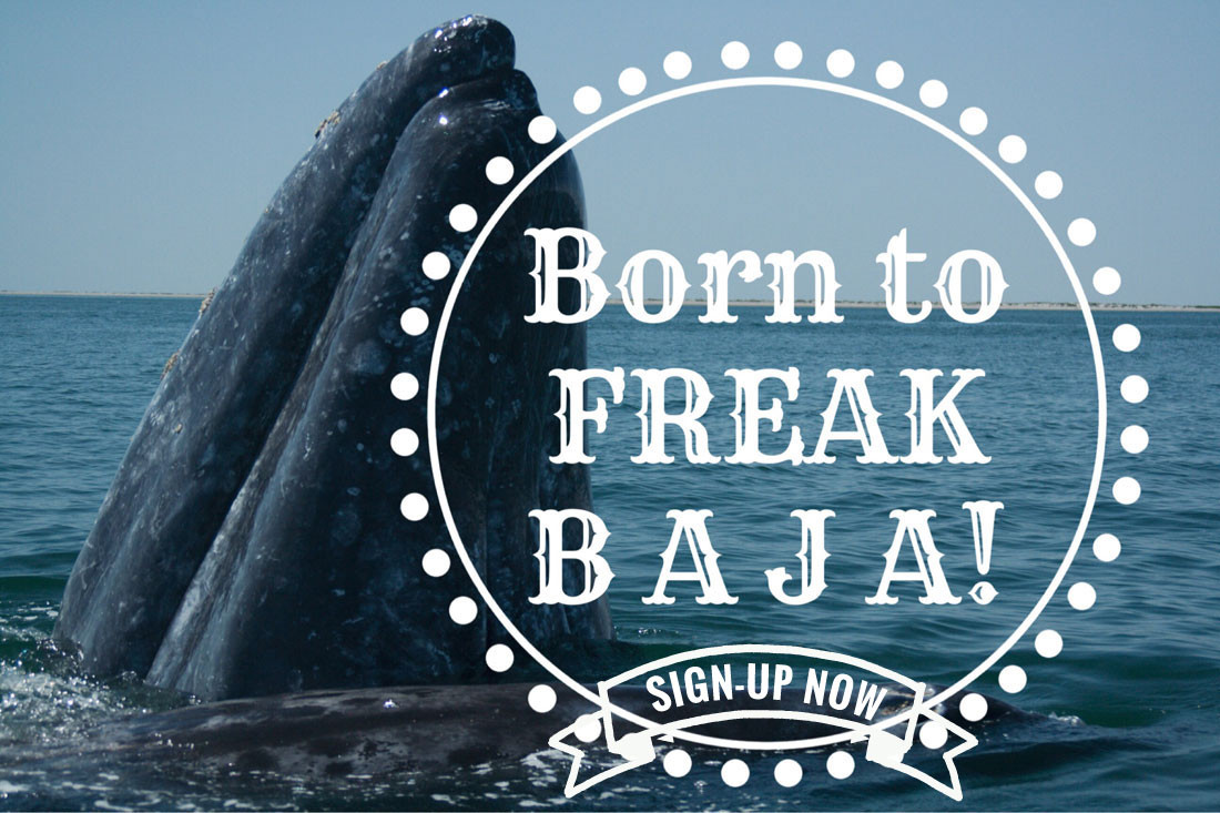 Born to Freak Baja Retreat with Sarah Seidellman