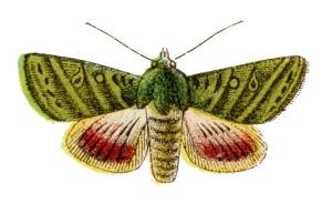 Beastie of the Week: Moth, by Sarah Seidelmann, FollowYourFeelGood.com