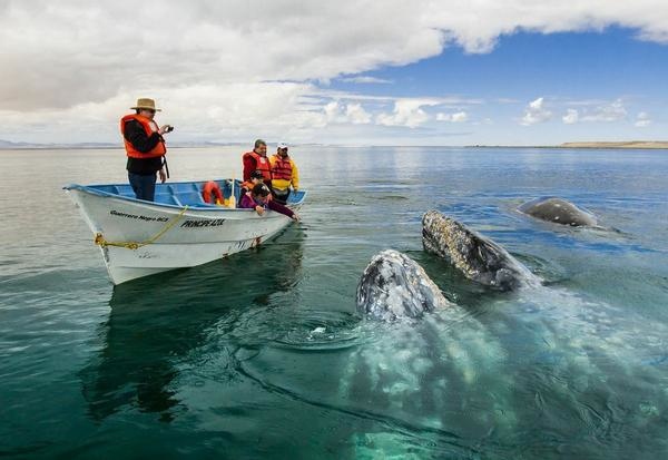 whale in boat